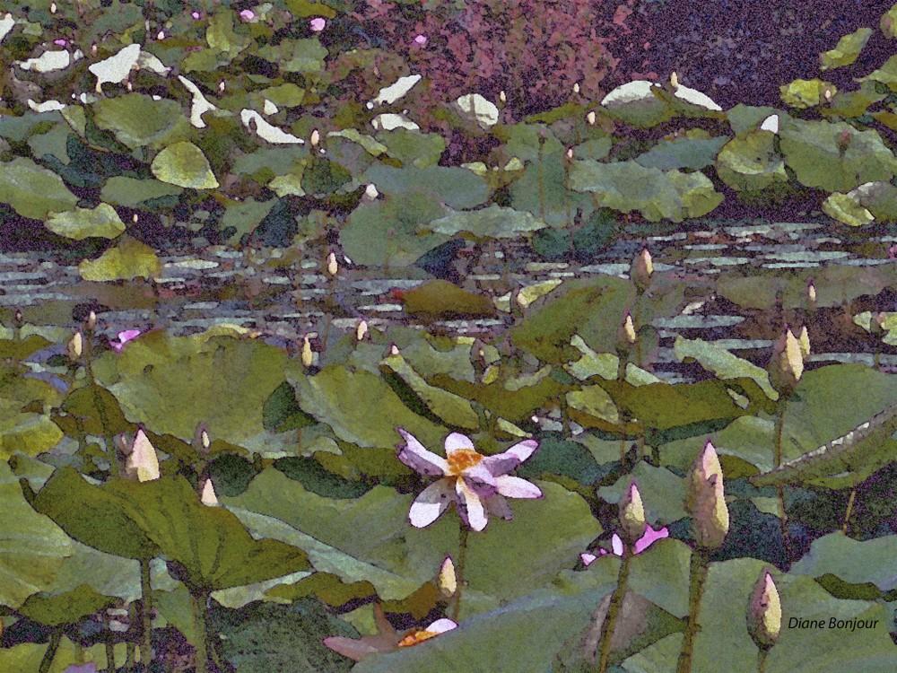 Lago dei fiori