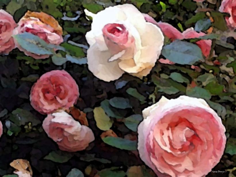 Il mese delle rose con Diane Bonjour