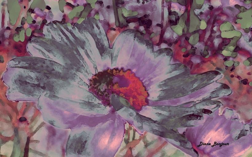 margherite rosa_modificato-1